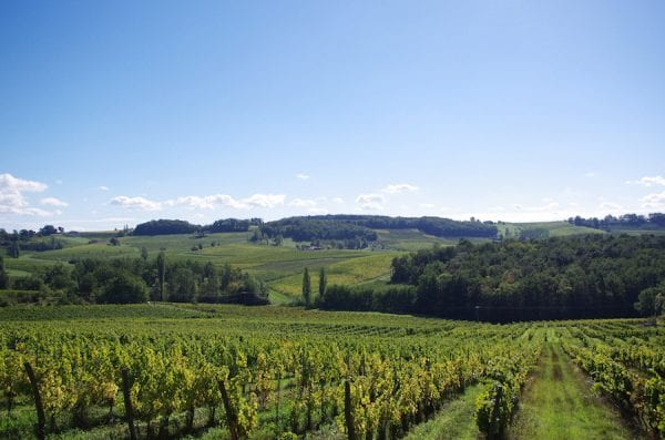 Vineyards of the region
