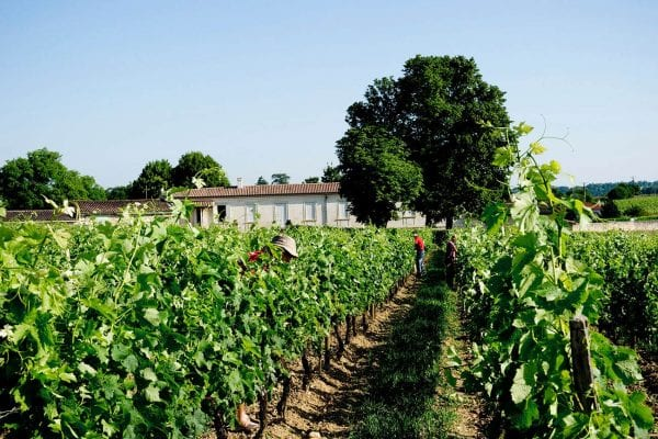 Vrai Canon Bouche wine estate, Ideally centrally located between Bordeaux, Bergerac and Saint Emilion