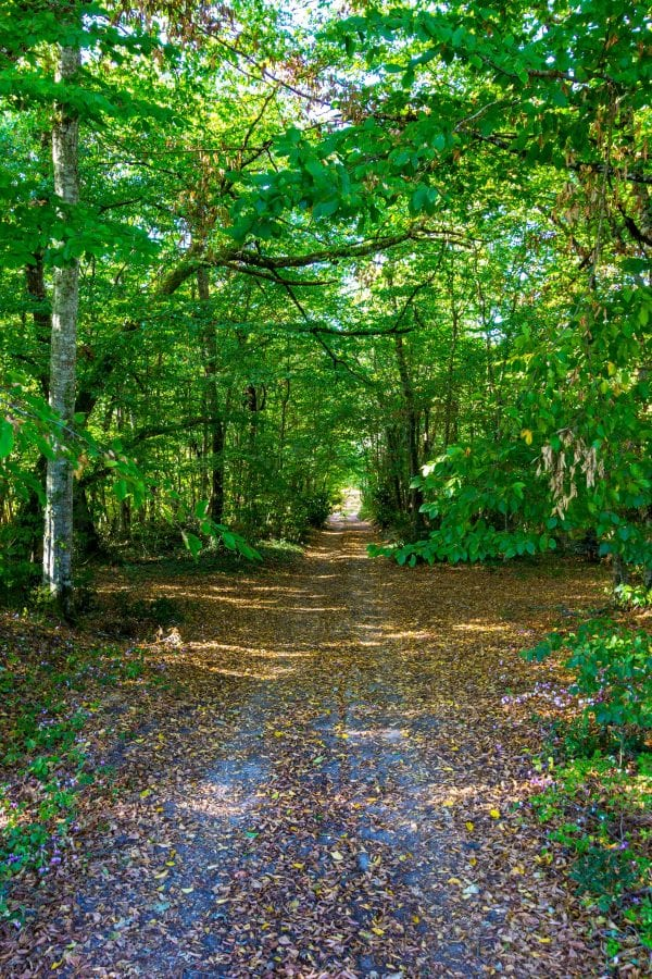 Early Autumn, explore the woodlands