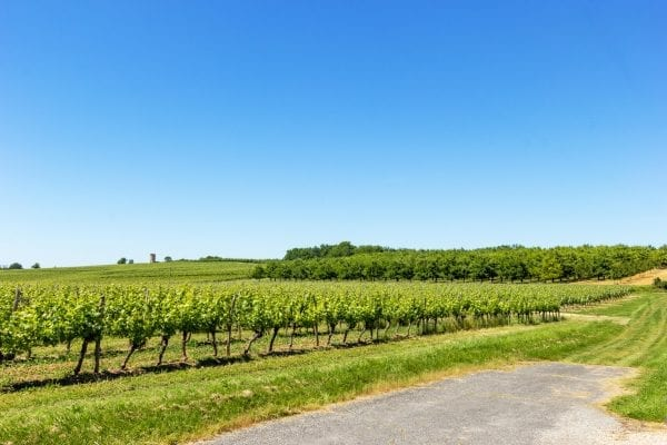 Looking from the driveway, vineyards and plum orchards