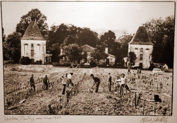 Planting of the vines in 1977 next to favreau