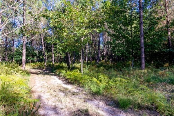 The managed woodland is a mixture of hardwoods and softwoods, pine and deciduous