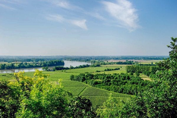 Walk through the vineyard and see the views, the Dordogne river