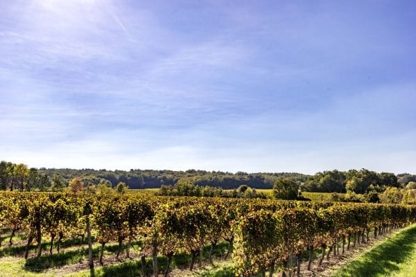 Walk through the vineyard, wonderful views and lots of wildlife